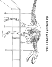 Bones Juvenile T-Rex Coloring Page