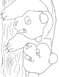 Two Panda Bears Coloring Page