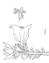 Bee & Flower Coloring Sheet
