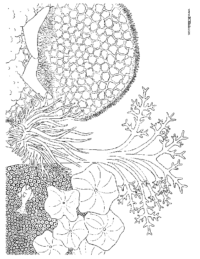 Coral Reef Coloring Sheet