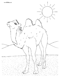 Desert Camel Coloring Picture