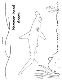 Hammer Head Shark Coloring Page