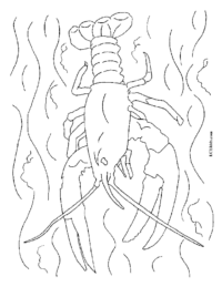 Lobster in Water Coloring Page
