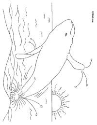 Jumping Whale Coloring Page