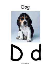 Letter D Classroom Poster