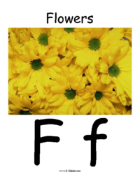 Letter F Classroom Poster