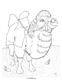 Saddled Camel Coloring Sheet