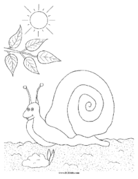 Snail Coloring Picture